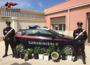 Una piantagione di marijuana in una frazione di Erice: arrestato un giovane cuoco