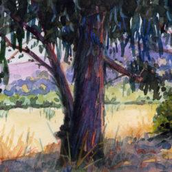 BlueEucalyptus