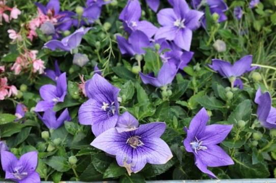 purpleflowersinfrance
