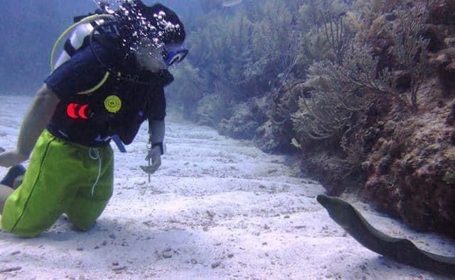 eel encounter diving in belize