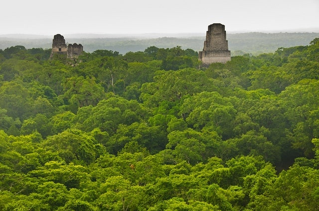 Tikal Guatemala Maya jungle view