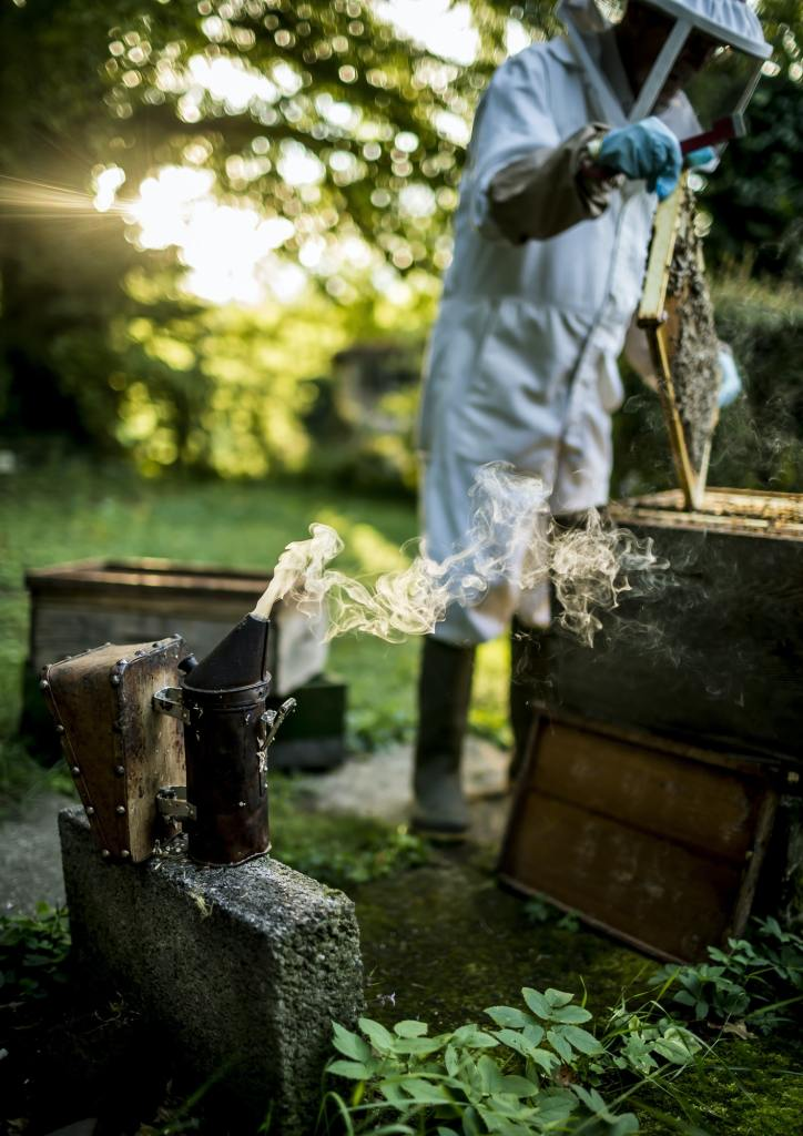 Beekeeper wearing a veil lifts a tray covered in honeybees out of a beehive.