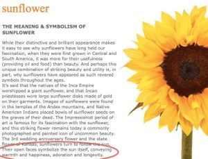 why the sunflower for bella domain media?