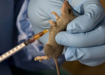 Lassa Fever has Returned | Check out the Latest Reports