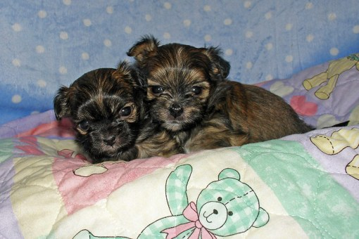 Brothers Lancelot & Galahad at 4 weeks