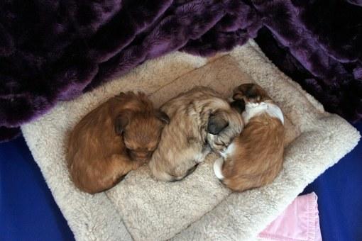 Littermates Peacefully Sleeping