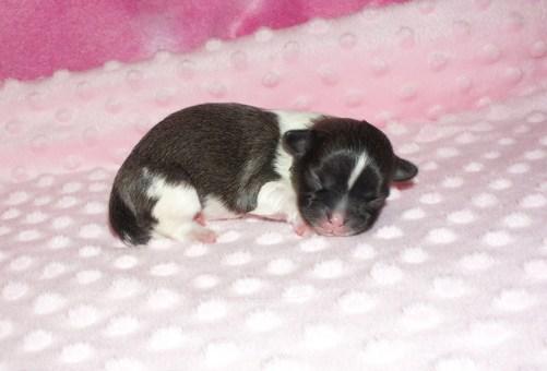 Newborn Lyla