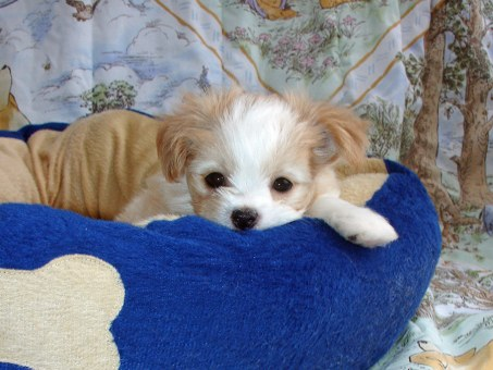 Oliver at 6 weeks