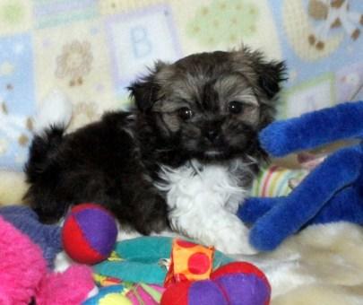 Pippi at 5 weeks