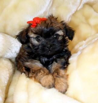 Sweet Sadie at 6 weeks