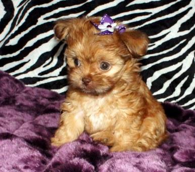 Trudie at 7 weeks