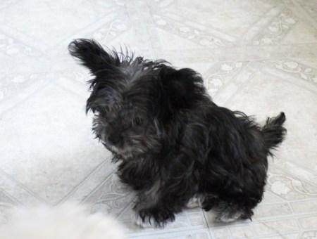 Winnie at 10 weeks
