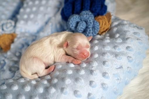 Freestyle Newborn