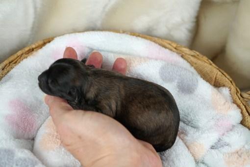 Sweetie Newborn
