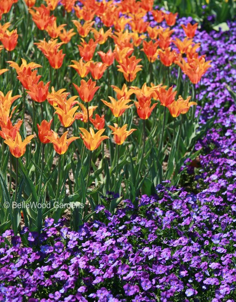 purple and orange flower garden 88+ Orange Flowers Garden Color Combinations - 101 Color
