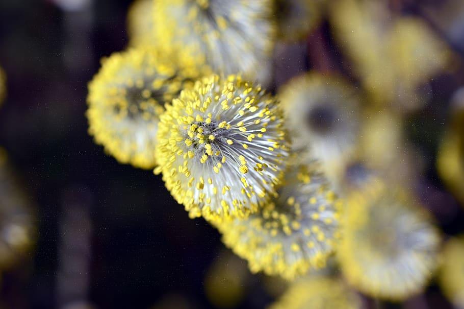 Allergie: 10 regole utili per chi è allergico ai pollini!