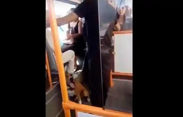 МВД нашло гомельчанина, который с бойцовской собакой ...