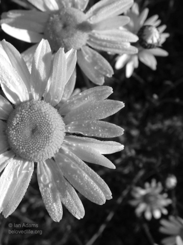 beloved life: close up (terra divina)