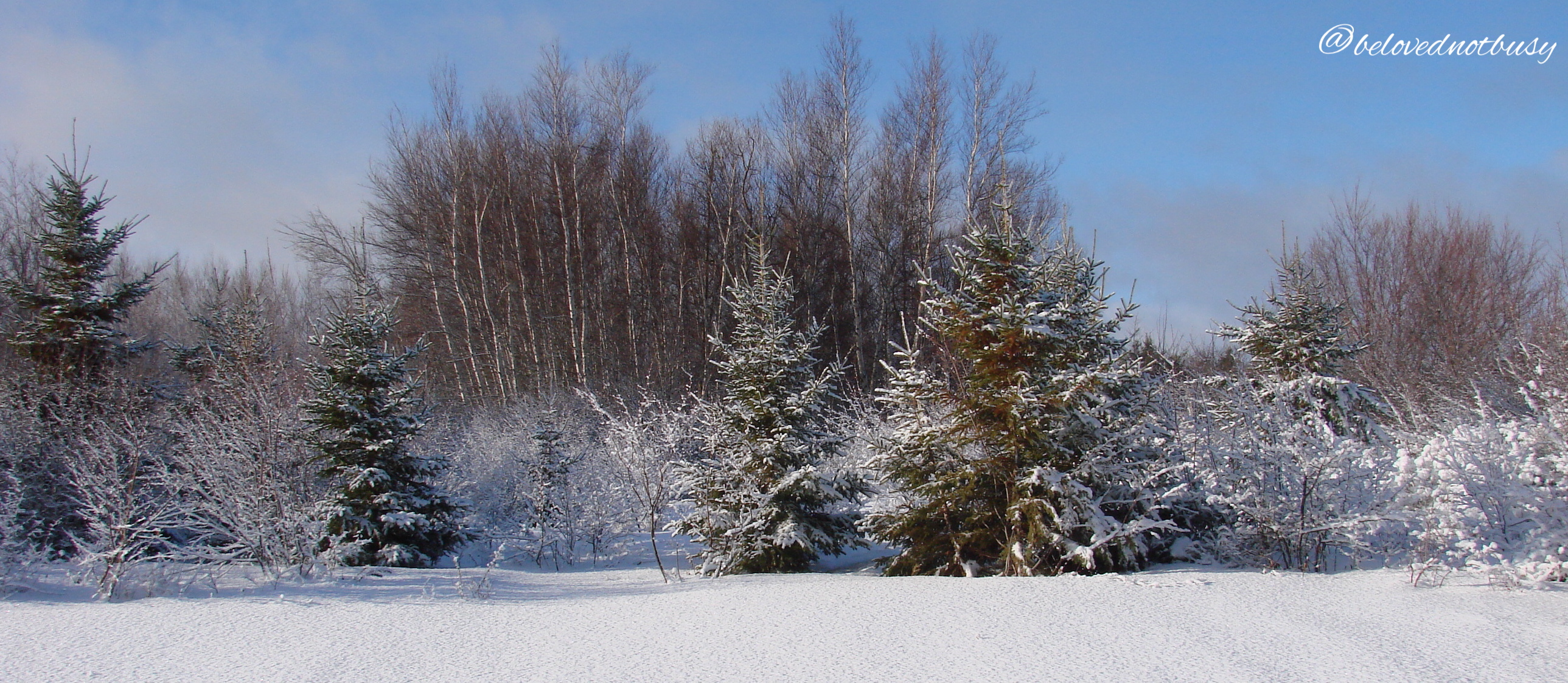 The back of our soon-to-be Christmas tree field after the first real snow of the year.