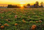 Fall festivals, farms, orchards and events in and around Washington, DC