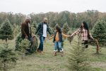 Cut-your-own tree farms in Virginia and Maryland