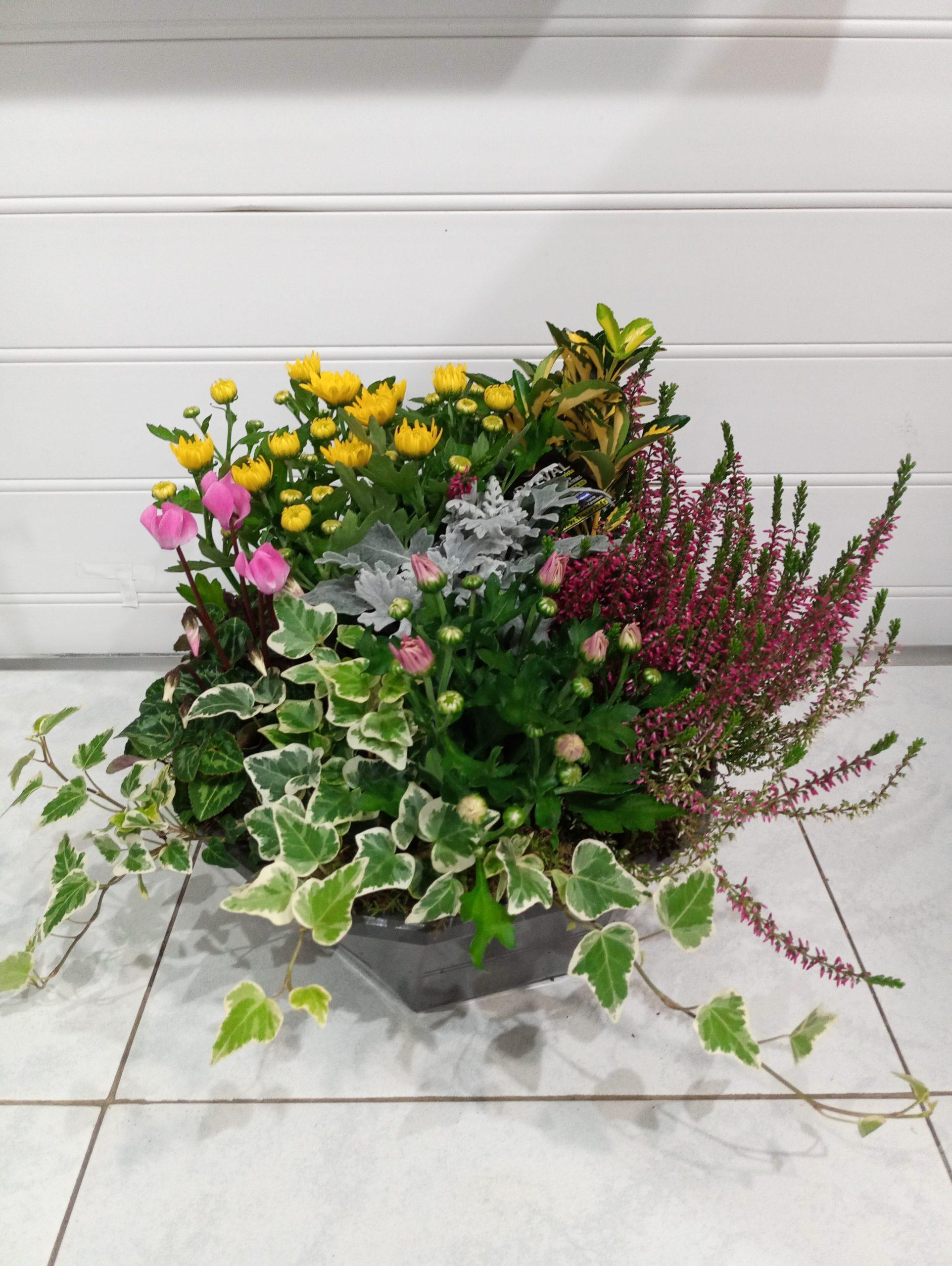 Coupe de plantes Rose THÉA