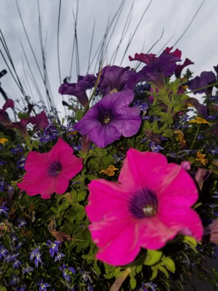 Photo of Hanging Basket by Belynda Wilson Thomas