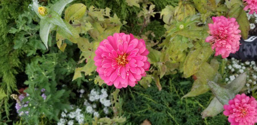 Make Something - Photo of pink flowers taken by Errol Thomas