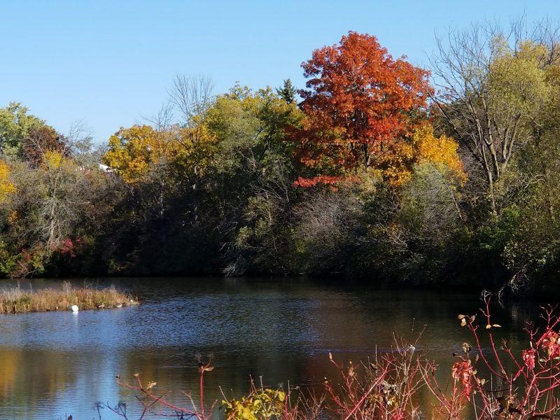 Photo of pond by Belynda Wilson Thomas