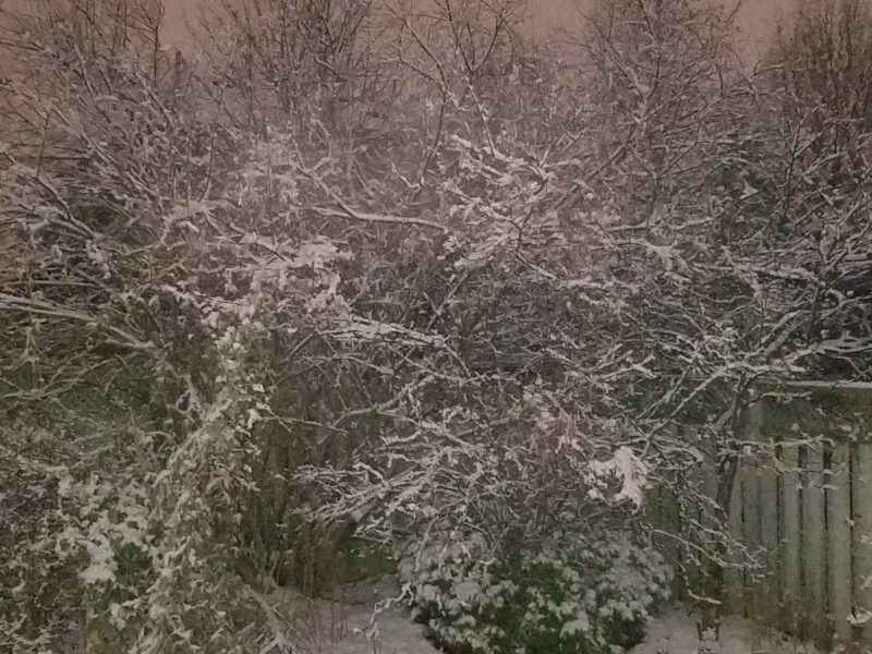 Simplifying Life - Snow covered bushes photo by Belynda Wilson Thomas