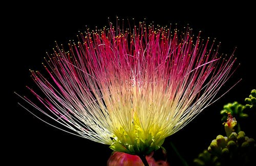 Stock photo of colorful flower.