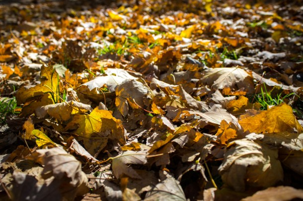 Leaves on the ground in the fall