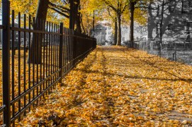 Leaves on the ground in the fall in Jackson Sqaure