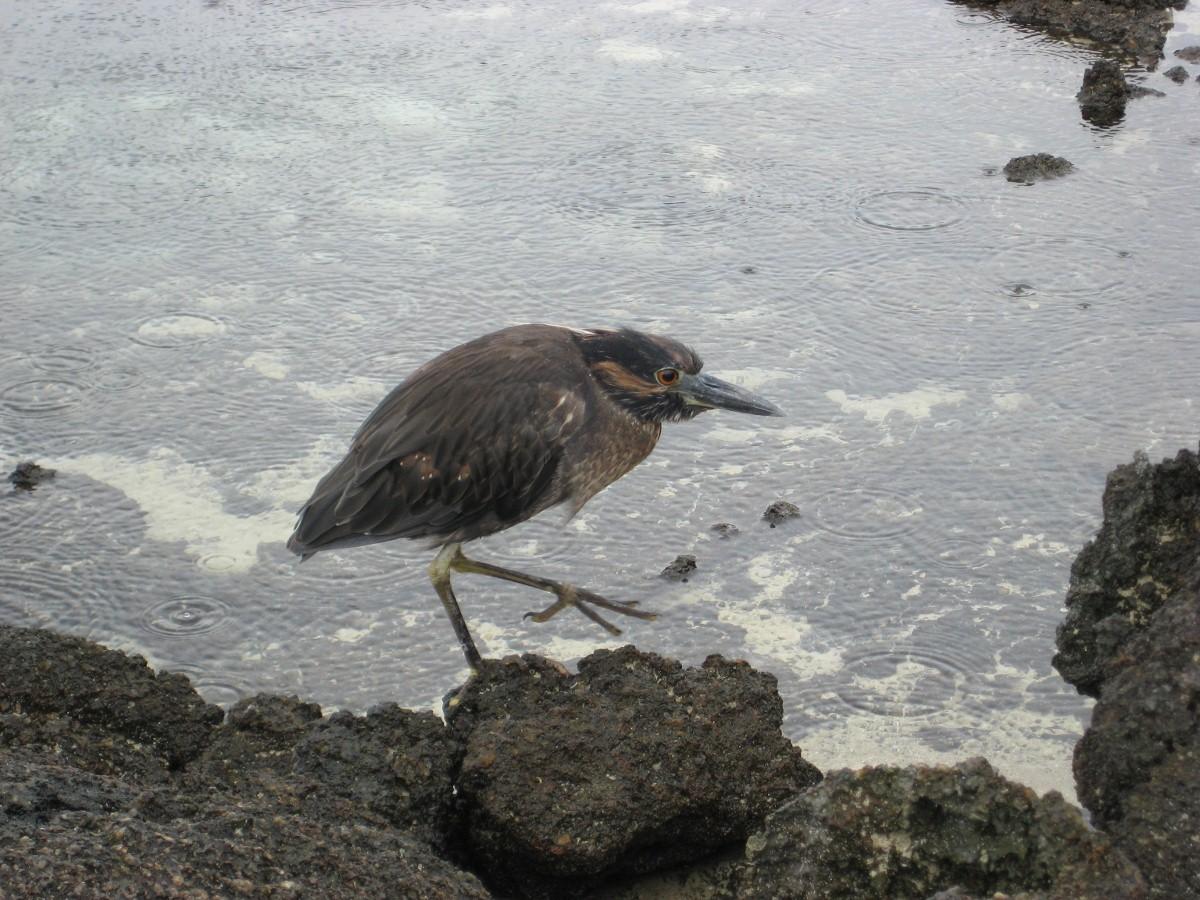 Galapagos Islands Animals Clinic