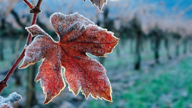 Photo of Sanabria registra la temperatura más baja del país pudiendo llegar a los -9 grados