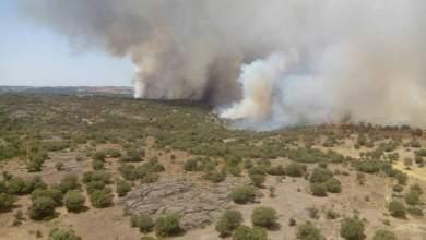 Photo of Zamora y León acumulan el 50% de los incendios con 1.265