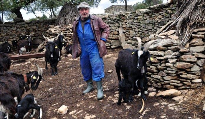 Photo of Homenaje a Ángel Carrascal, criador del último rebaño de cabras en libertad
