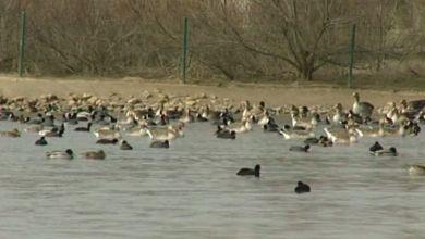 Photo of Las Lagunas de Villafáfila superarán estas semanas las 10.000 aves invernantes