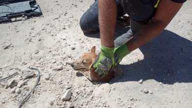 Photo of VÍDEO: Los bomberos rescatan a un perro atrapado en una alcantarilla