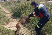 Photo of Los bomberos de Benavente rescatan a un corzo de una acequia cerca de Villabrázaro