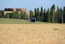Photo of La cosecha de cereal en Castilla y León alcanza la segunda mayor producción de los últimos 35 años