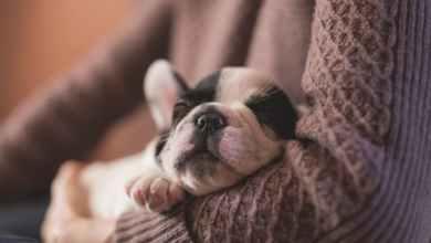 Photo of OMS indica que «cada vez hay más pruebas» de la transmisión del COVID-19 de humanos a felinos y perros