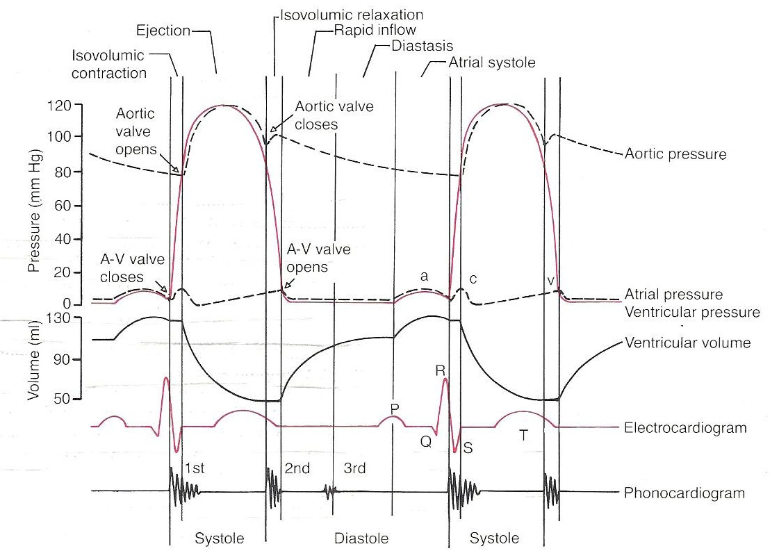 Electrocardiograph Ecg Ekg Interpretaion