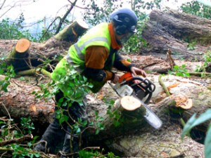 Arborist with chainsaw sawing into felled log