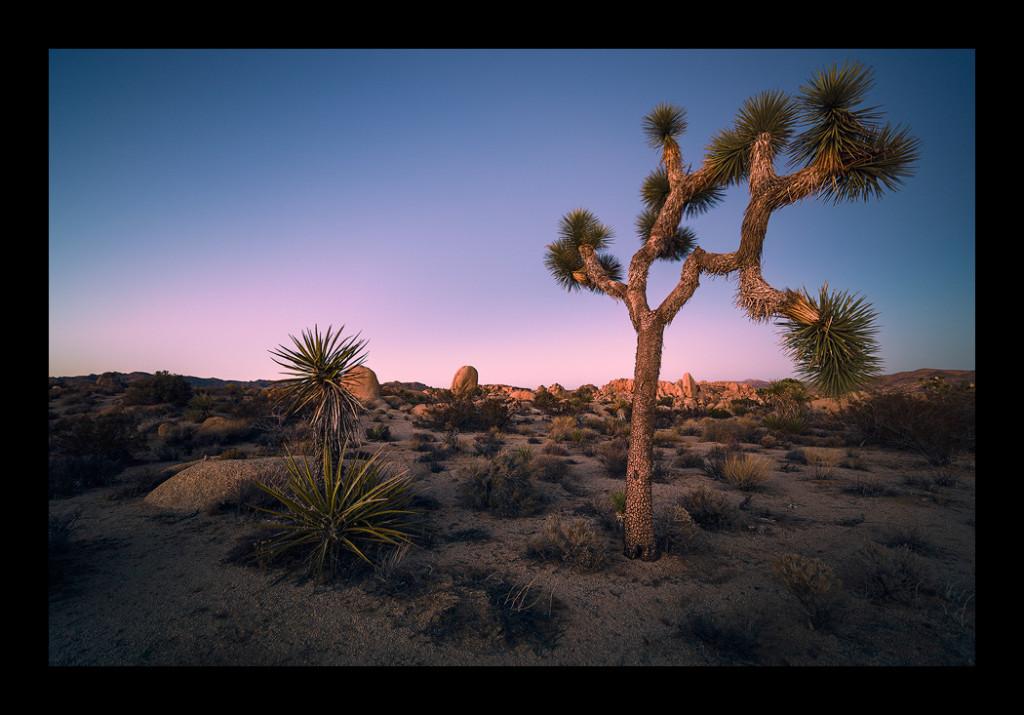 Fine-art photography of Joshua Tree National Park.