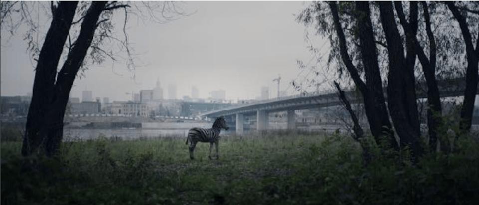 """Movie """"Of Animals And Men"""" by Łukasz Czajka"""