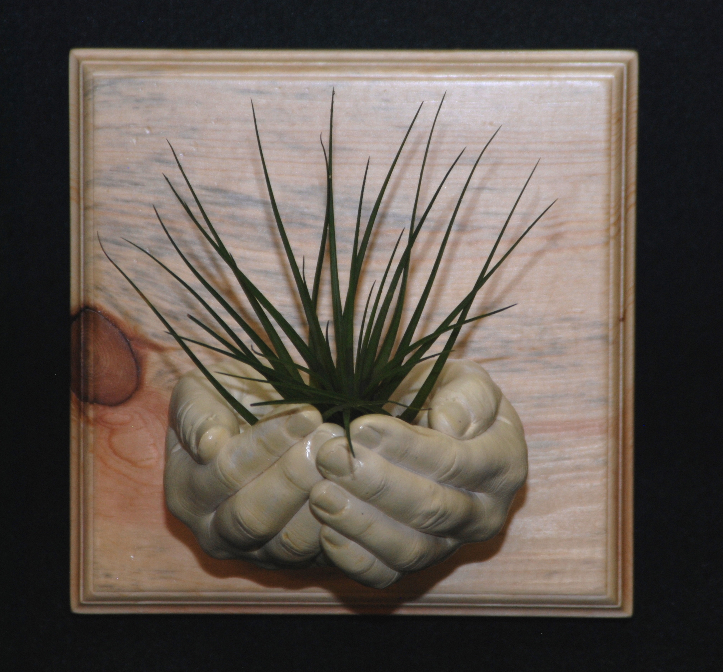sculpture of hands displayed on beetle kill pine with air plant
