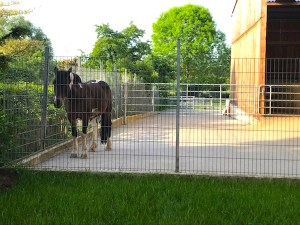 horses as backyard neighbors