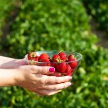 Benedek Gyümölcsfarm fotózás (10)