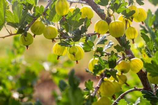 Benedek Gyümölcsfarm fotózás (18)